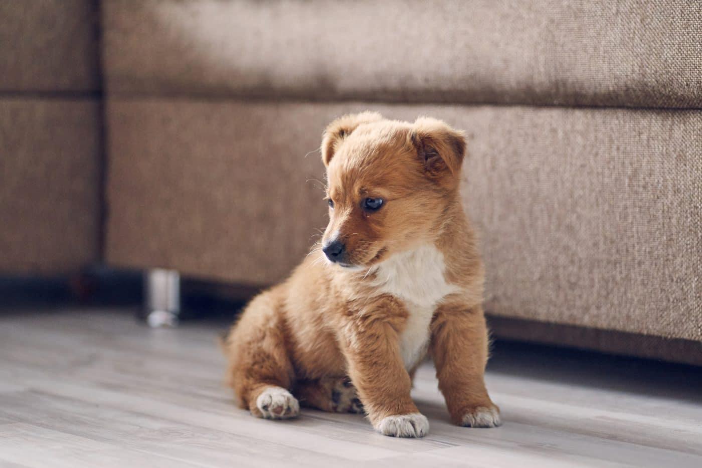 hogar-seguro-para-cachorros